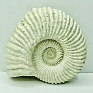 Seashell Wall Art Ceramic Nautical Home Decor